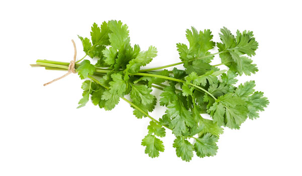 Coriander - How to Get Rid of Freckles