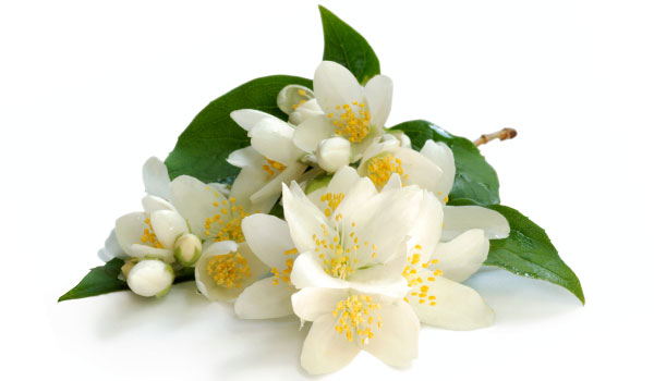 Jasmine - Home Remedies for Jasmine
