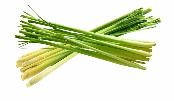 Citronella - How to Cleanse Your Body