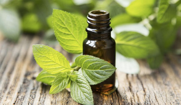 Peppermint Oil - Home Remedies for Canker Sores