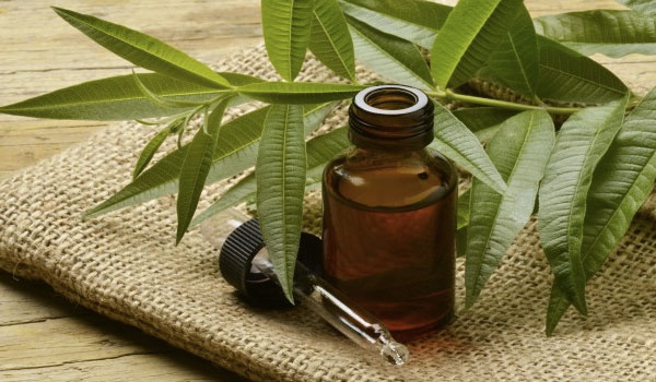 Tea tree oil - Home Remedies for Sore Nipples