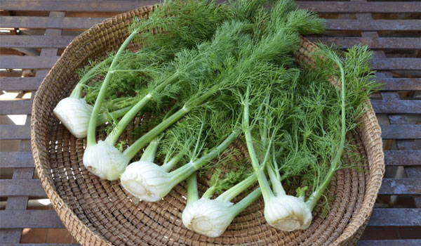 Fennel - Home Remedies for Anxiety