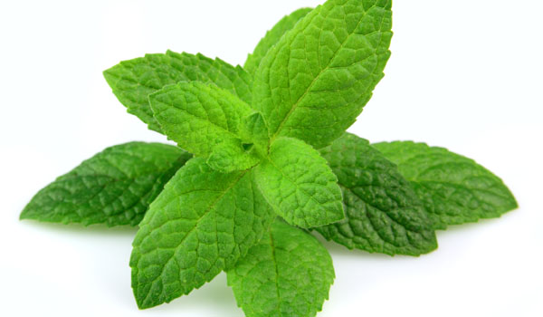 Peppermint - Home Remedies for Abscess Tooth