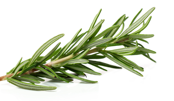 Rosemary - Home Remedies for Sprained Ankle