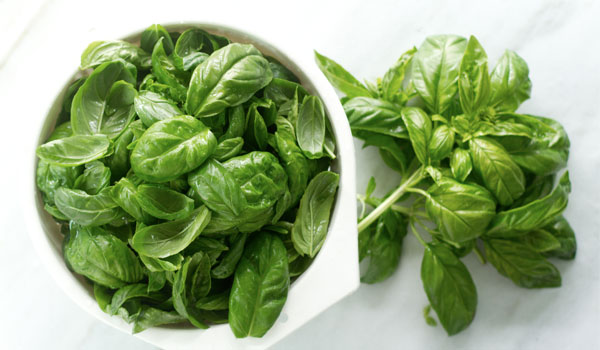 Basil - Home Remedies for Blisters on Tongue