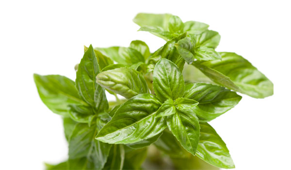 Basil - How to Get Stronger Teeth and Gums