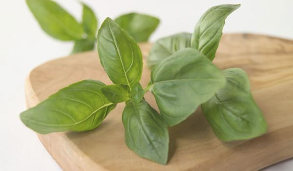 Basil - How to Balance Hormone Levels Naturally