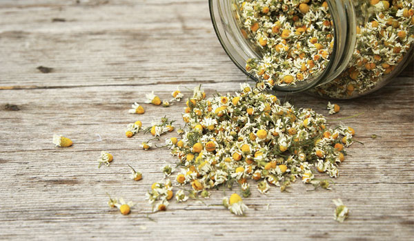 Chamomile - Home Remedies for Canker Sore
