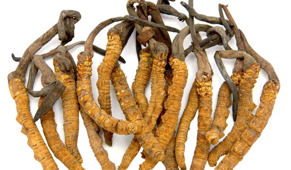 Cordyceps - Home Remedies for Impotence