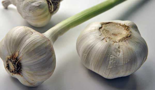 Garlic - Home Remedies for Ear Discharge