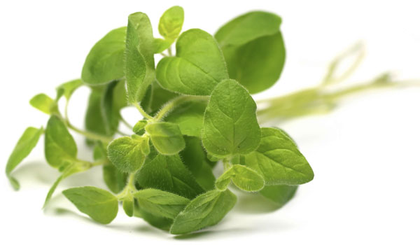 Oregano - Home Remedies for Amebiasis