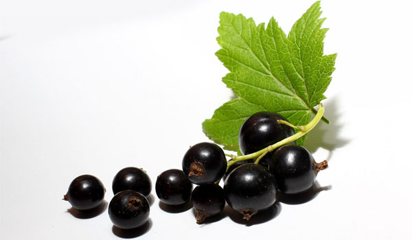 Black Currant - Home Remedies for Menopause