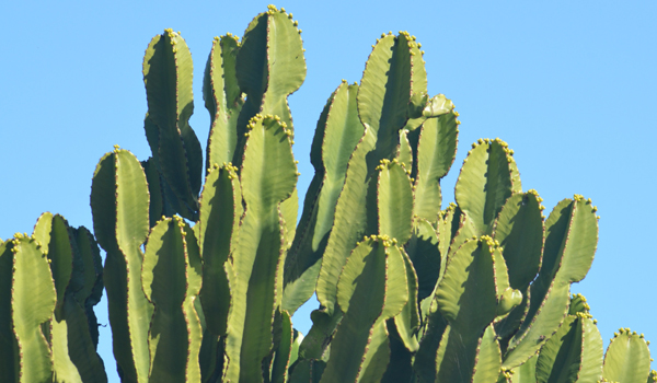 Cactus - How To Stop Bleeding