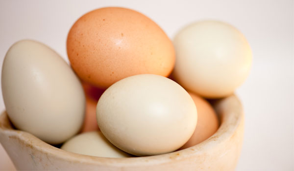 Egg - Home Remedies for Alopecia