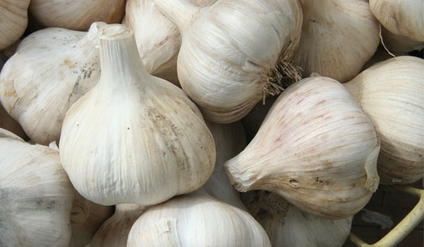Garlic - Home Remedies for Spider Bites