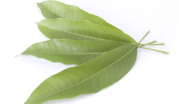 Mango Leaves - How to Treat Ear Infection