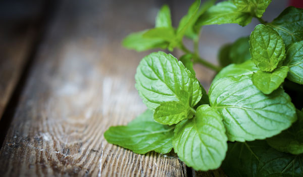 Peppermint - Home Remedies for Swollen Glands