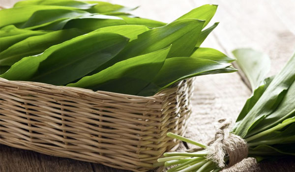 Ramson - Home Remedies for Tunnitus