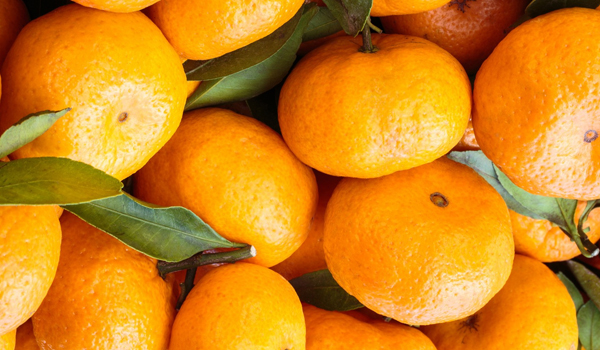 Tangerine - How To Treat A Hematoma