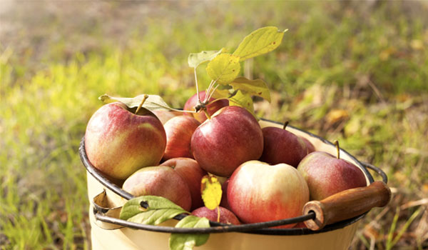 Apples - 16 Ways that Apple Cider Vinegar Benefits You
