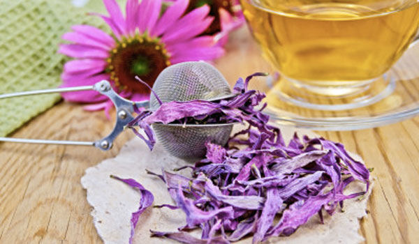 Echinacea tea - How to Treat Gangrene
