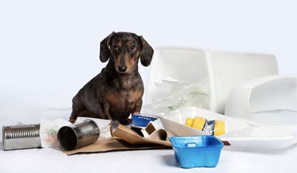 Harmful things for dog's digestion - How to Treat Dog Diarrhea