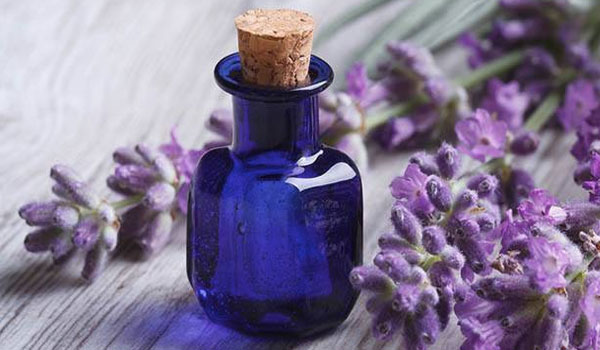 Lavender essential oil - Home Remedies for Minor Burns