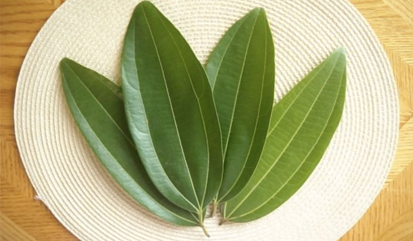 Mango leaves - Home Remedies for Diabetes