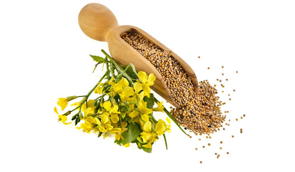 Mustard Seeds - Home Remedies for Heavy Menstrual Bleeding