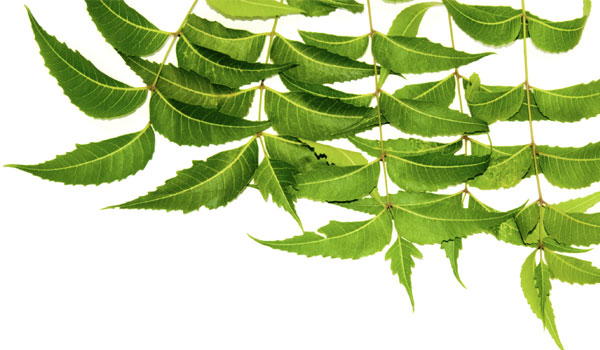 Neem leaves - How to Stop Nail Biting