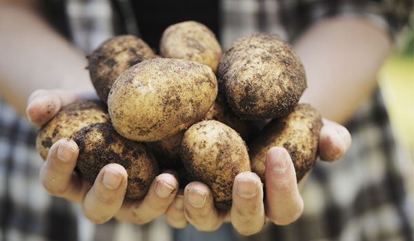 Potatoes help with kidney stones - Health Benefits of Potatoes