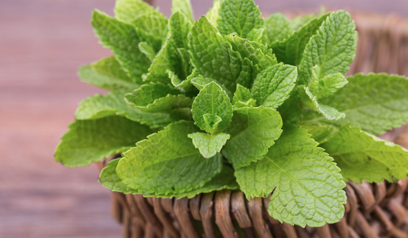 What Make Mint Leaves A Superfood?