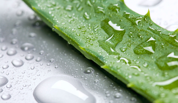 Aloe Vera - Home Remedies for Chafing