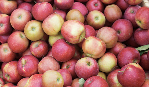 Apples improve neurological problems - Great Health Benefits of Apples
