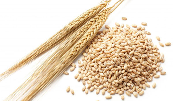 Barley - Home Remedies to Reduce High Creatinine Levels