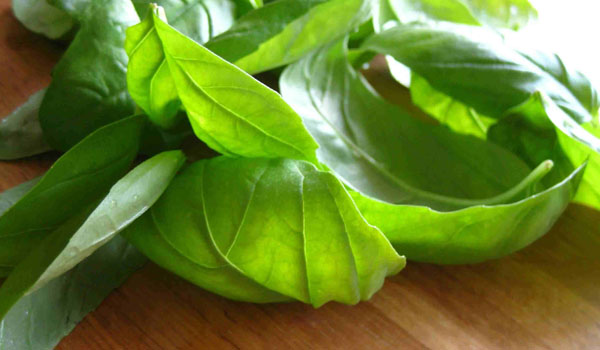 Basil - Home Remedies for Burping