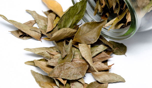 Bay Leaf - Home Remedies for Chest Congestion