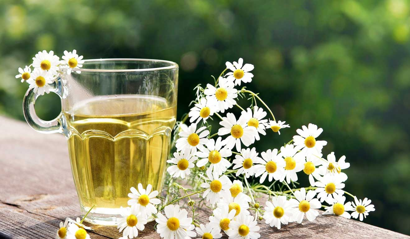 Top 10 Benefits of Chamomile