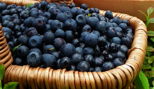 Bilberries - Home Remedies for Dermatitis
