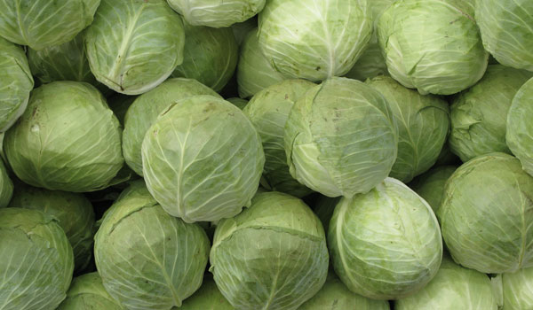 Cabbage reduces inflammation - Health Benefits of Cabbage