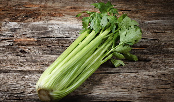 Celery has antiseptic property - Health Benefits of Celery