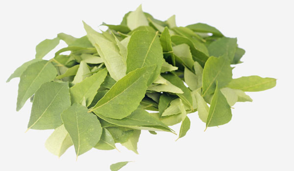 Curry Leaves - Home Remedies for Premature Graying of Hair