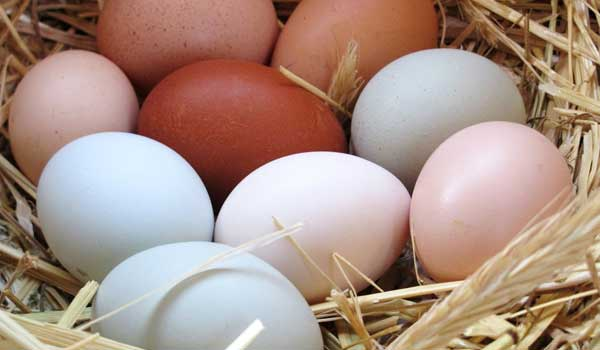 Heart - Health Benefits of Eggs