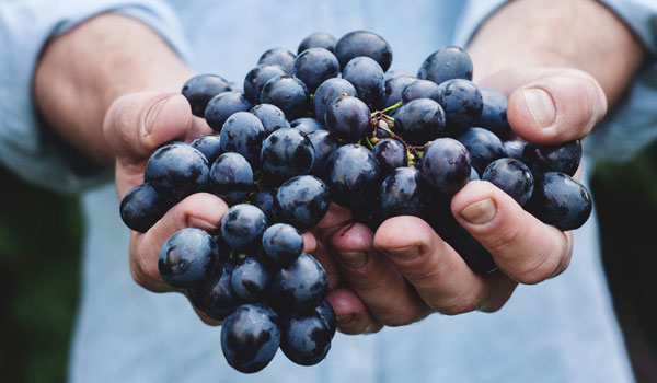 Grapes - Top Natural Foods to Prevent Cancer