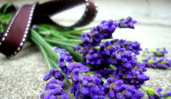 Lavender - Home Remedies for Hot Flashes