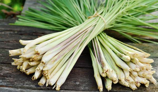 Lemongrass reduces cholesterol - Health Benefits of Lemongrass