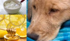 Home Remedies for Mange Mites in Dogs