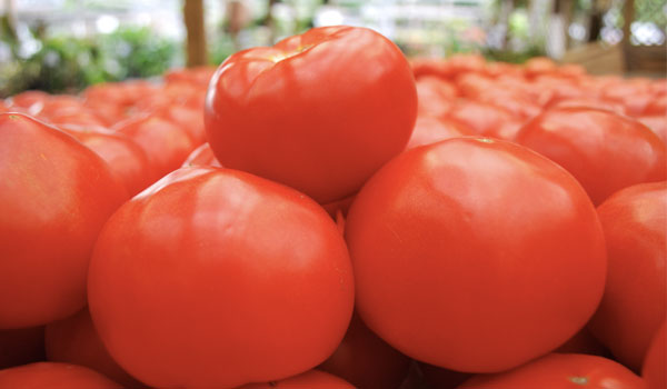 Nutrient source - Health Benefits of Tomatoes