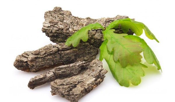 Oak Bark - Home Remedies for Hemorrhoid (Piles)