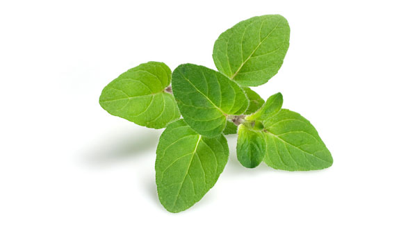 Oregano - Home Remedies for Whooping Cough
